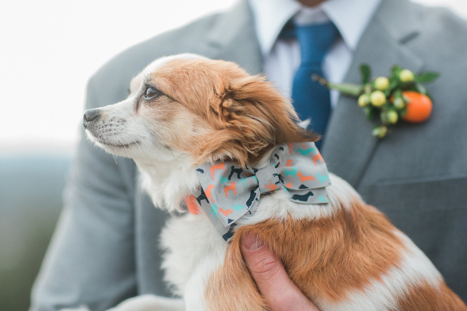 Wedding Dog Maine