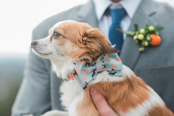 Wedding Dog Maine